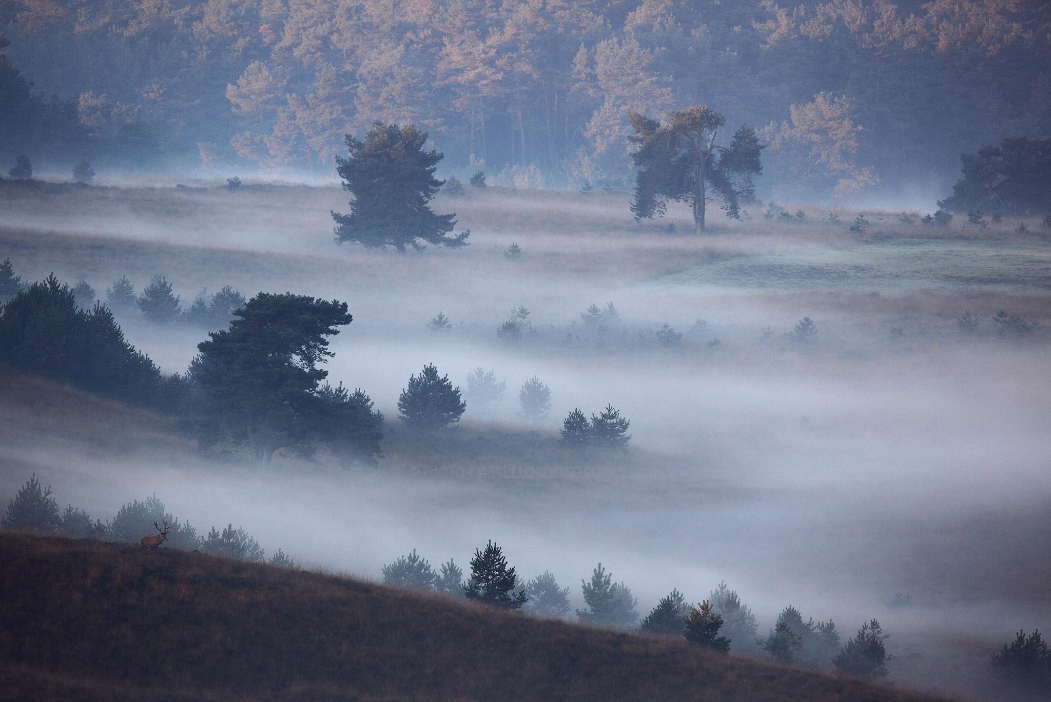 Landschap Veluwezoom; Landscape Veluwezoom