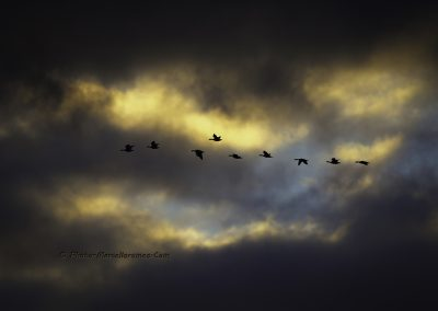 Geese in the Clouds_marcelloromeo_3564