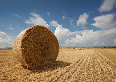 Strorollen blijven achter op het veld na de oogst